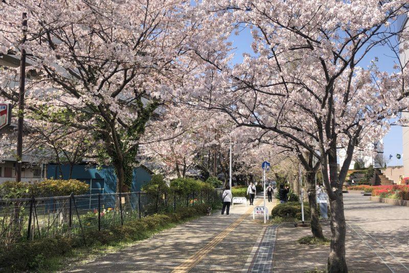 あーすぷらざ横の桜
