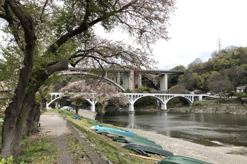 小倉橋と桜