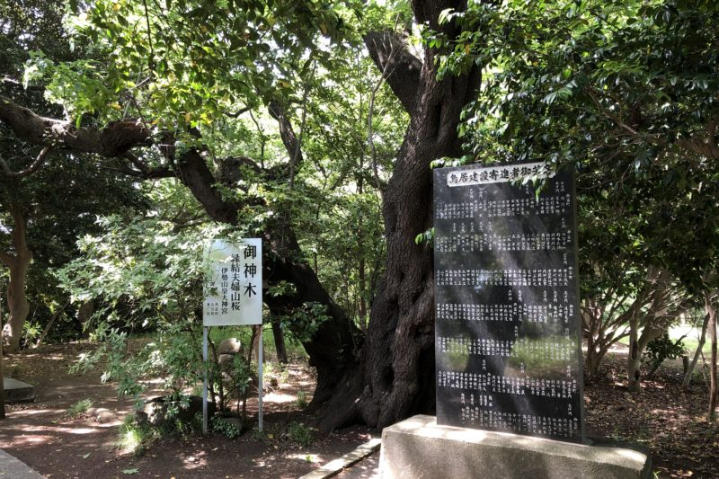 翠ヶ丘公園の御神木