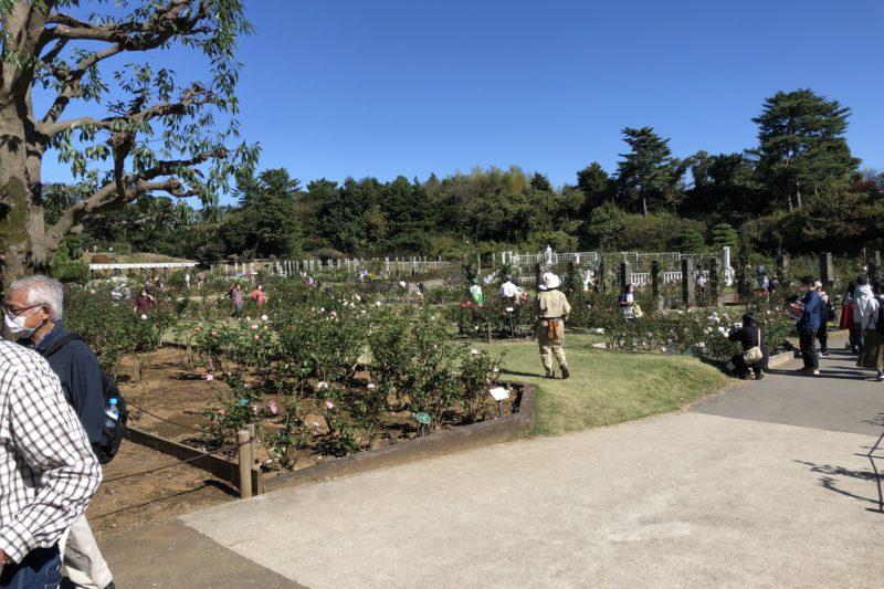生田緑地ばら苑