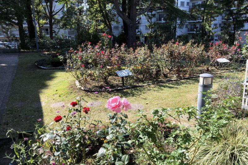 八幡山の洋館の薔薇