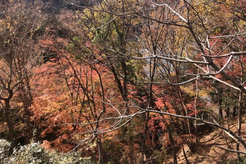 宮ケ瀬湖の紅葉