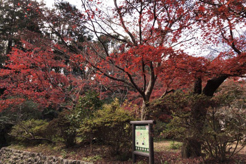 源氏山公園の紅葉