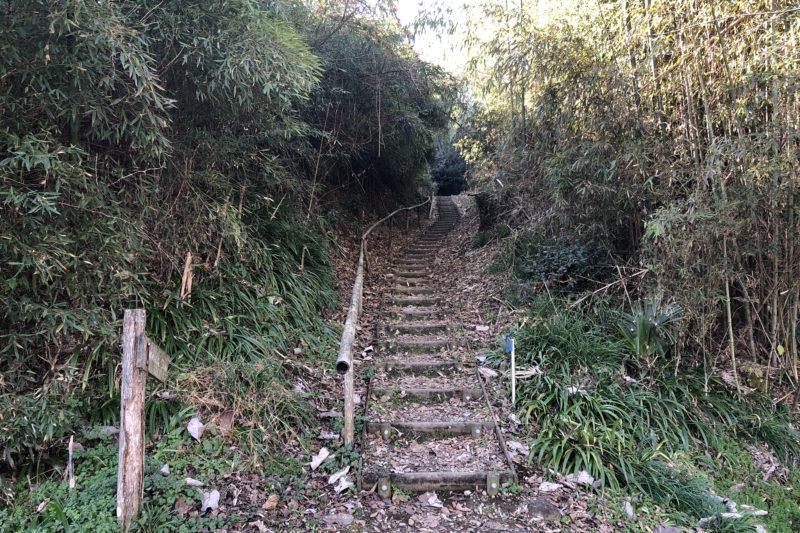 ロウバイの丘の道