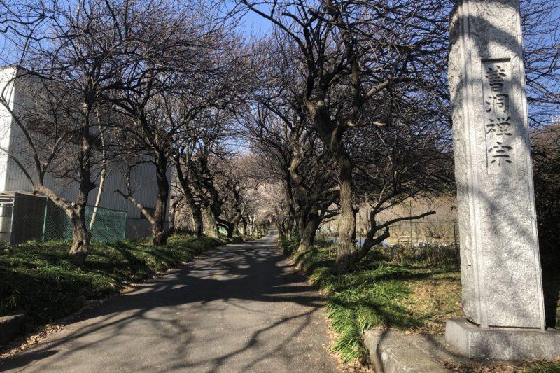 香曇寺の梅