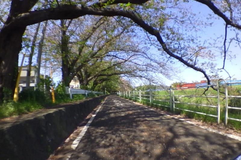 境川のサイクリングロード