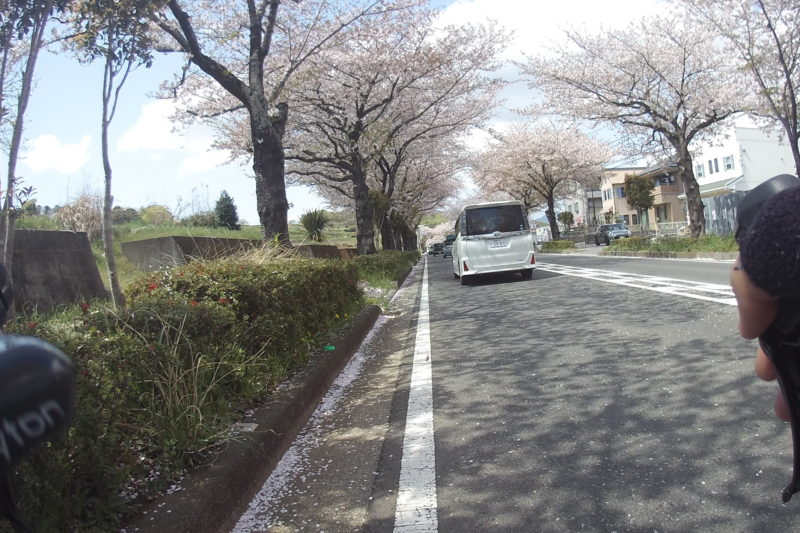 はだの桜道