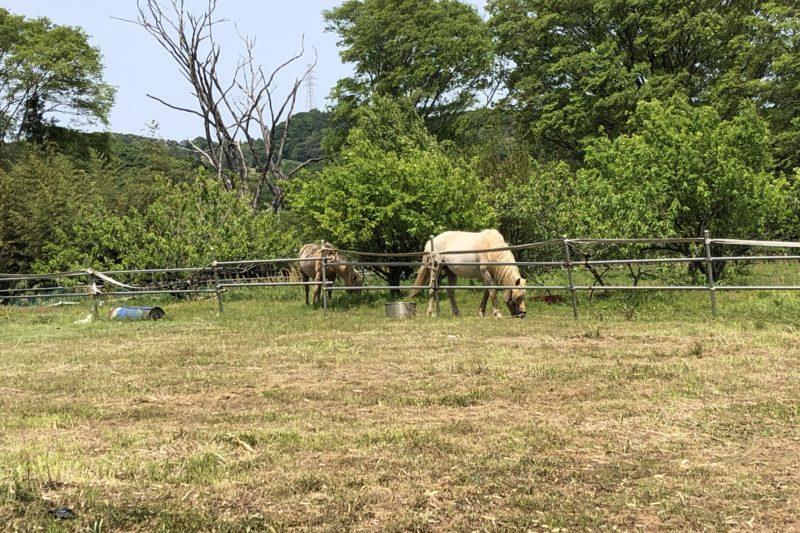 個人宅で飼われた馬