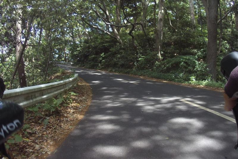 真鶴岬への道