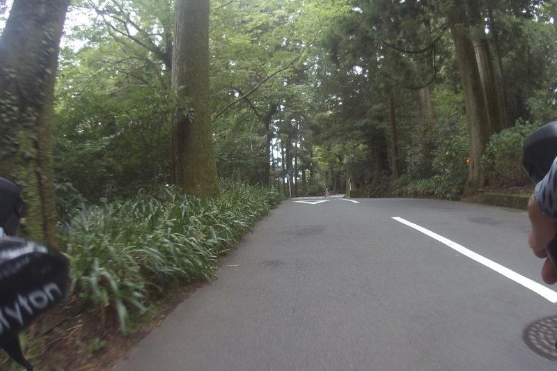 箱根神社の杉林