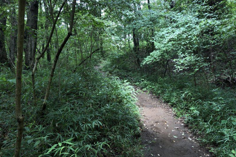 長池公園の林道