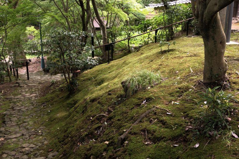 松永記念館の苔