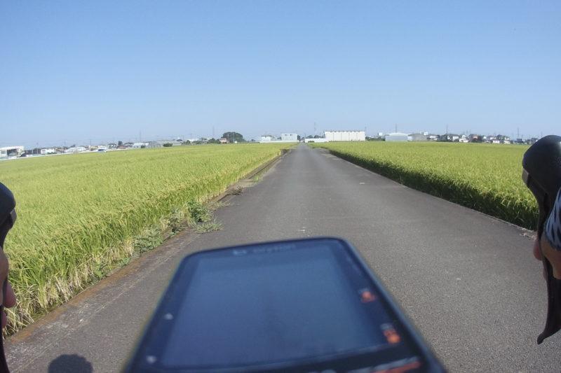 田んぼの道